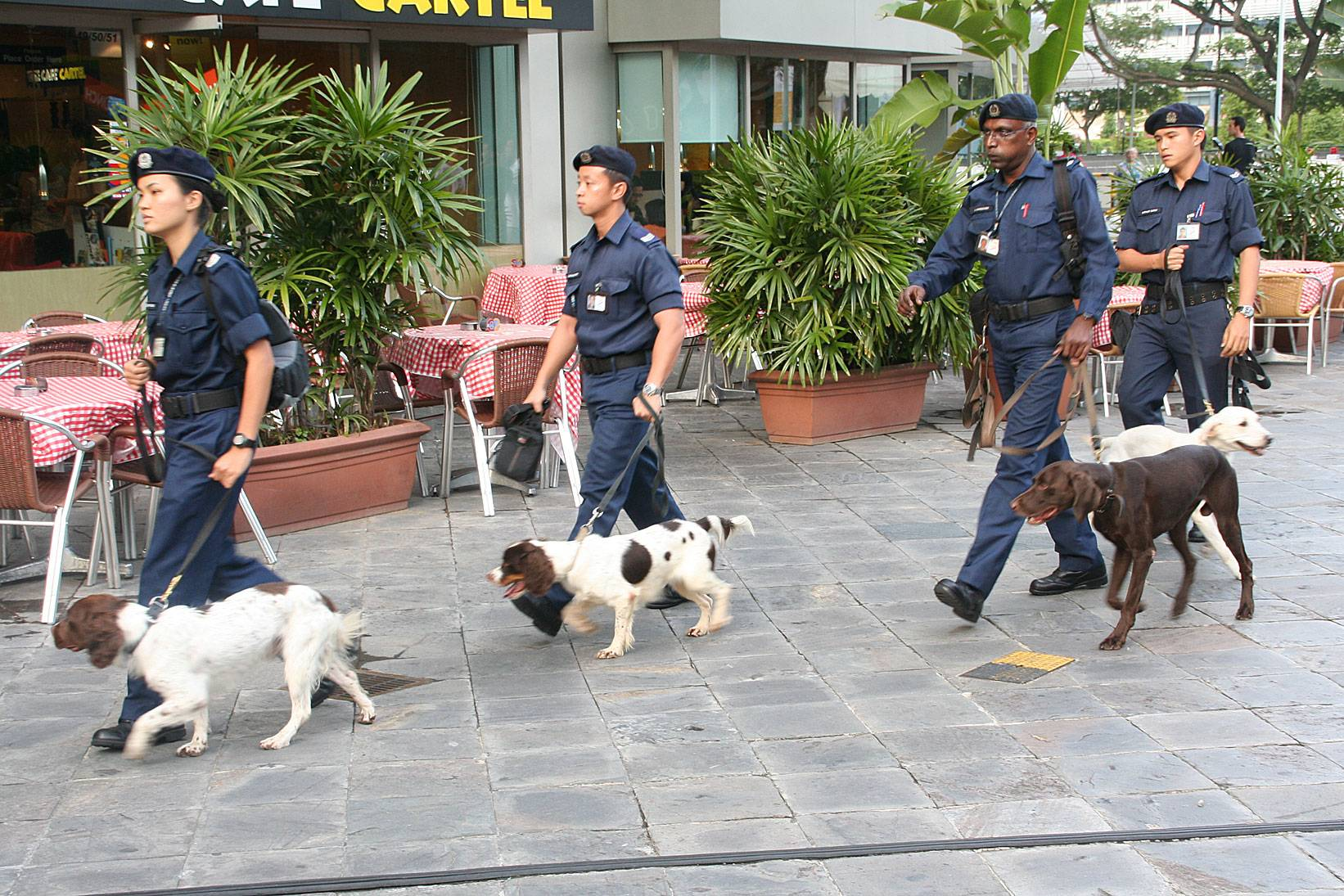 the role of the dogs in the police force Most certainly the police role still involves their being crime fighters, but in a much broader context in addition to the suppression of crime and the possible consequences of the use of force demand that it be exercised with the greatest degree of discretion the police officer should always try for.